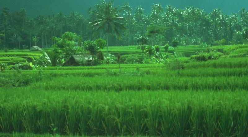 Fertile Volcanic Land in Bali