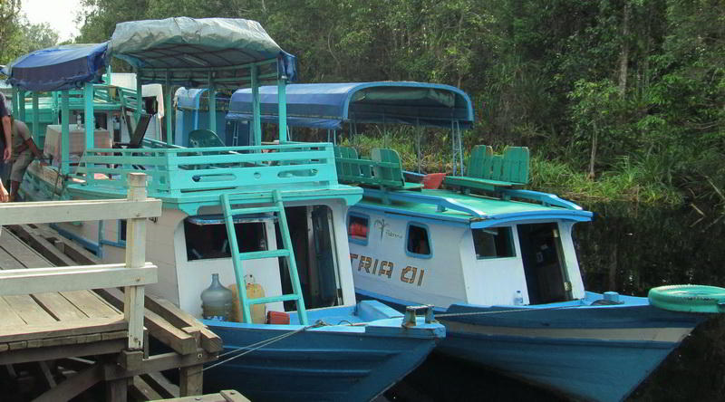 Hausboot in Tanjung Puting © Rima Suharkat