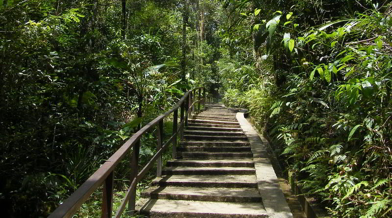 Trail Kinabalu National Park © ABT