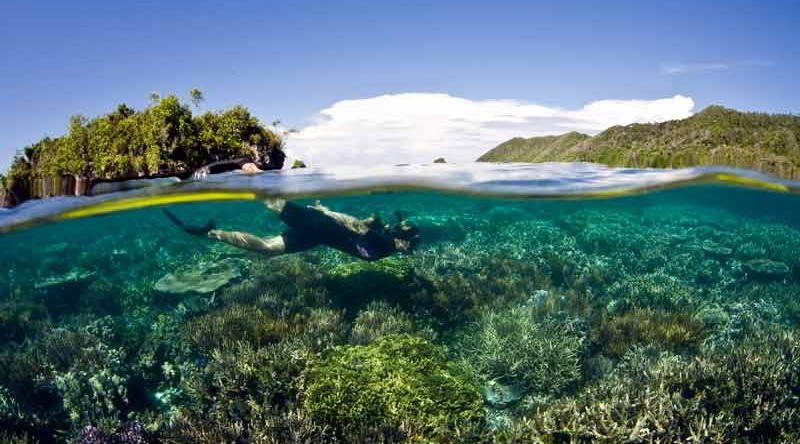 Unterwasserwelt in Raja Ampat © P.T. Tribal Diving