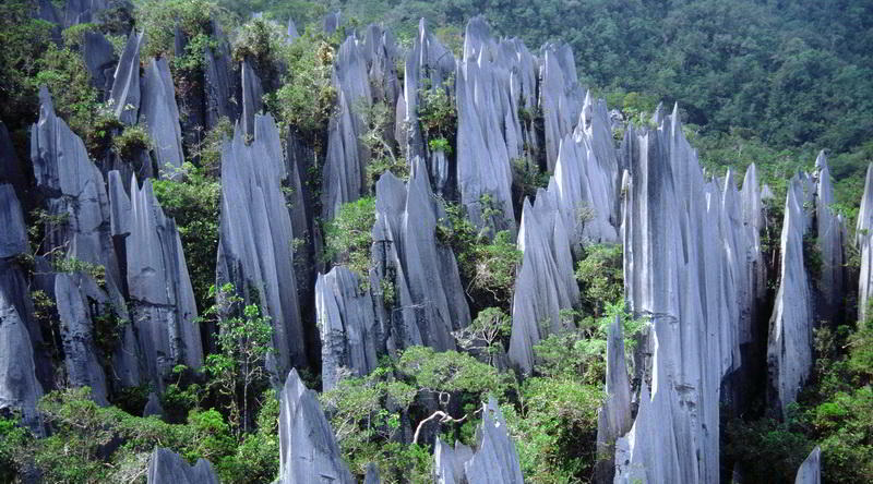 Pinnacles in Mulu © Malaysia Tourism Board