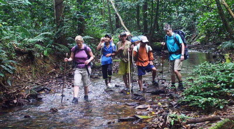 jungle trekking © Red Ape Trail